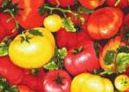 Patchworkstoff, Tomaten, Farmer John´s Garden, Gemüse, Küche